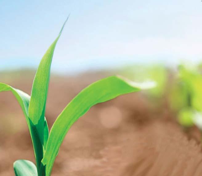fertilizzanti-organici-seminative-2
