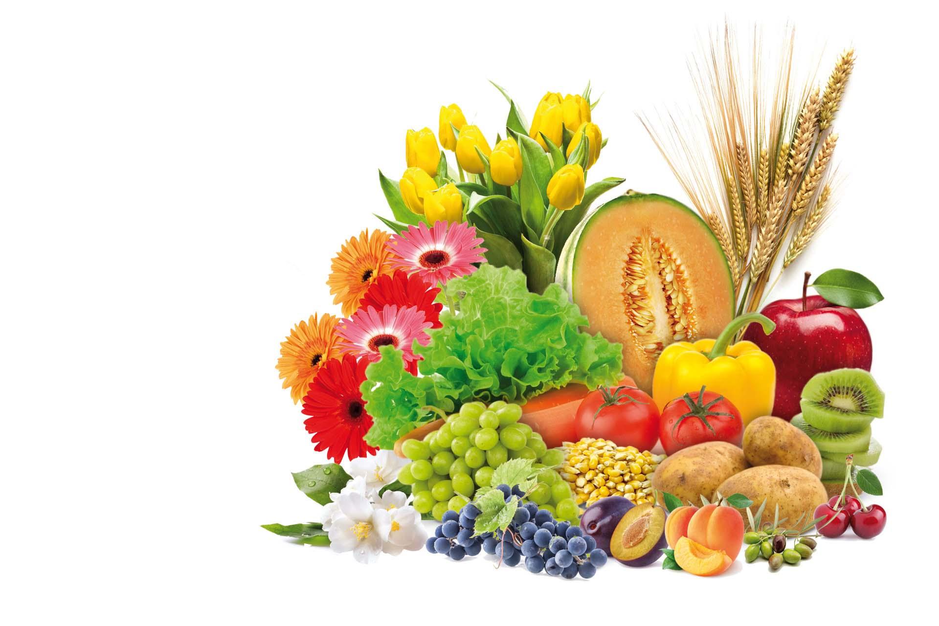 Composizione di frutta verdura con concimi organici e fertilizzanti naturali